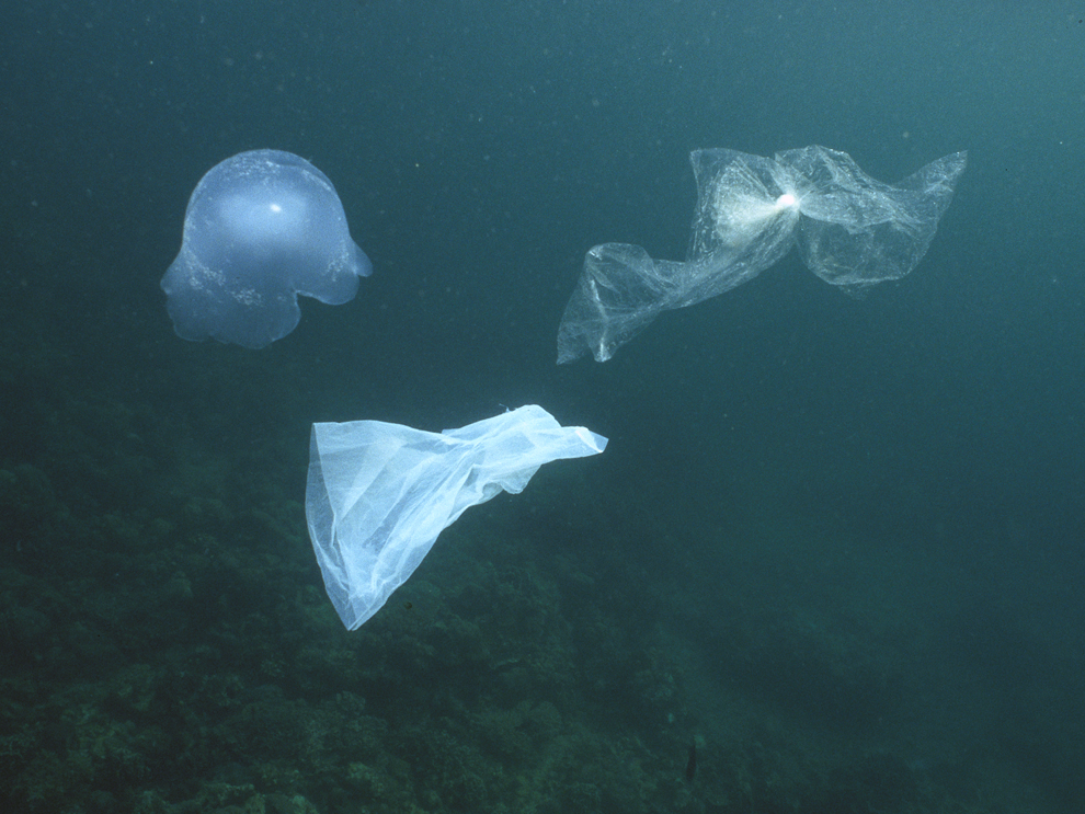"Plastic bags, like these floating near the Philippines, look like jellyfish. These pieces of ocean debris float on ocean currents and accumulate in collections called ""garbage patches."""