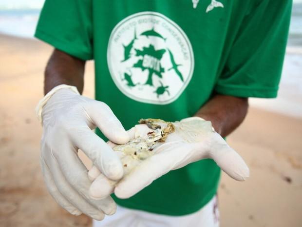 Estudantes de biologia e voluntários do Biota encontraram plástico dentro da tartaruga. (Foto: Jonathan Lins/G1)