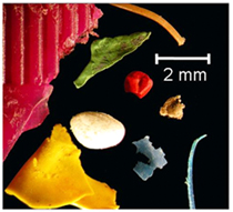 Como são visualizados os fragmentos de microplásticos em um microscópio óptico © Dr. Mark Browne, University College Dublin e Environmental Science and Technology